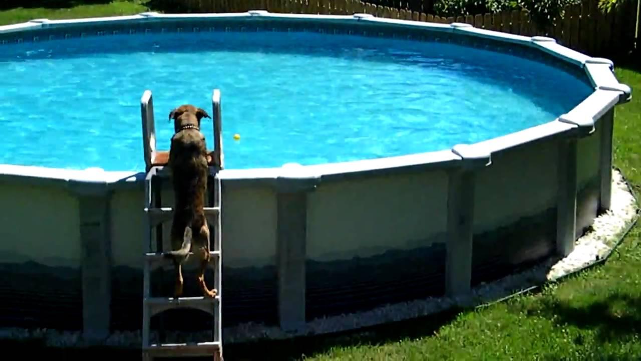 Куче базен