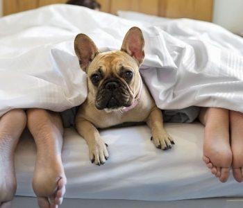 Луѓето кои чуваат кучиња се поздрави