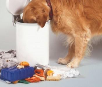 3 експресни решенија за да се ослободите од мирисот на ѓубре во домот