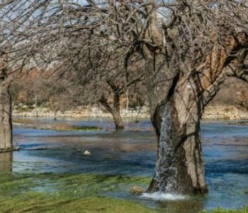 Чудо во Црна Гора: Вода извира од дрво