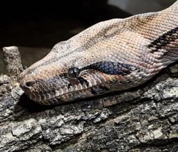 Сезоната на змии е во ек:Еве што да направите ако ве касне змија отровница