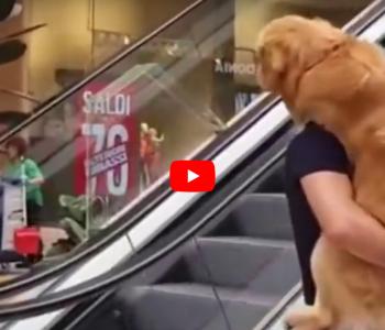 Кучето се плаши да се качи на ескалаторот, па неговиот сопственик најде решение