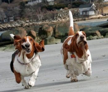 Во овој град е забрането шетање на кучиња во текот на денот: Домашните миленици смеат да ги шетаат само возрасни лица