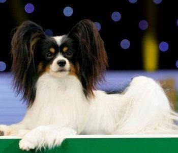 Ова е најубавото куче на светот за 2019 година