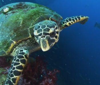 Откриени желки со неверојатна способност (ВИДЕО)