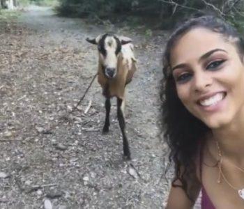 Каков нокаут! Оваа коза не е расположена за сликање (видео)