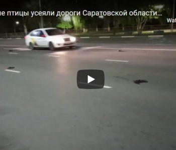 Во Русија мртви птици паѓаат од небото