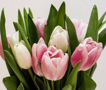 Какво значење има бојата на цвеќето кое го подарувате?